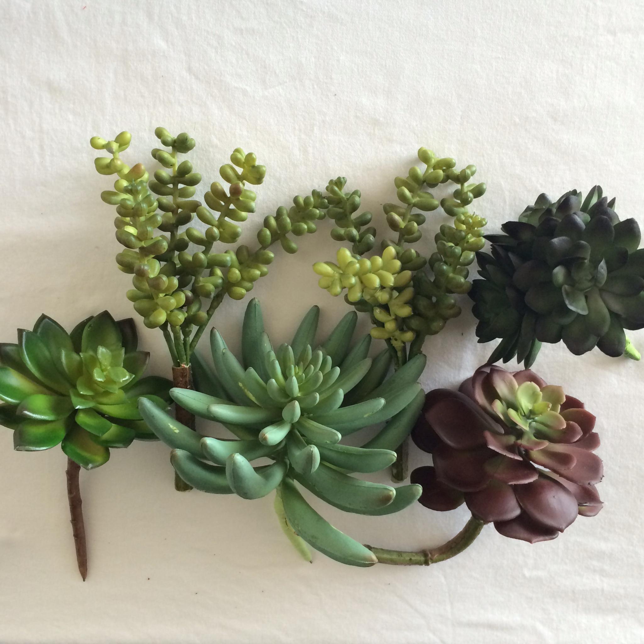 Succulents | Mrs Amber Apple blog